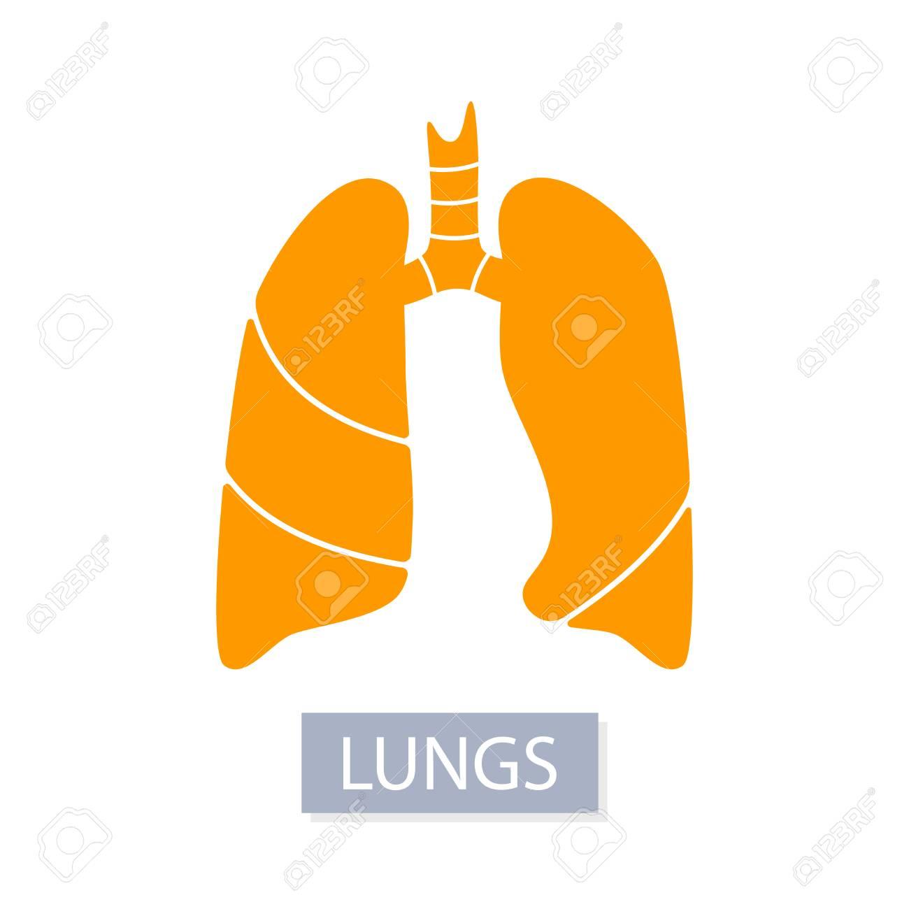 Medizinische Illustration Des Vektorschattenbildes Des Organs Des ...