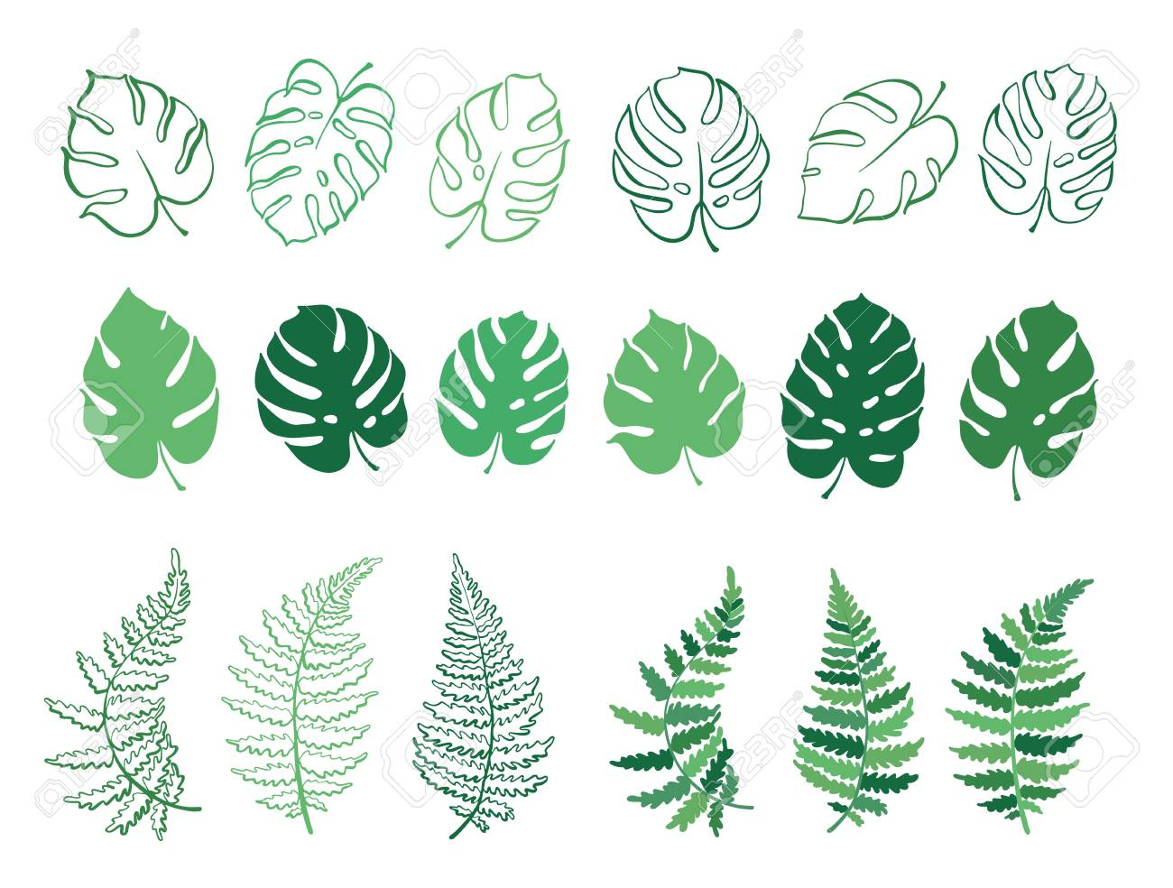 Vector Botanical Illustration Of Fern And Monstera Leaf Isolated Royalty Free Cliparts Vectors And Stock Illustration Image 101686777 Seamless background with autumn leaves. vector botanical illustration of fern and monstera leaf isolated