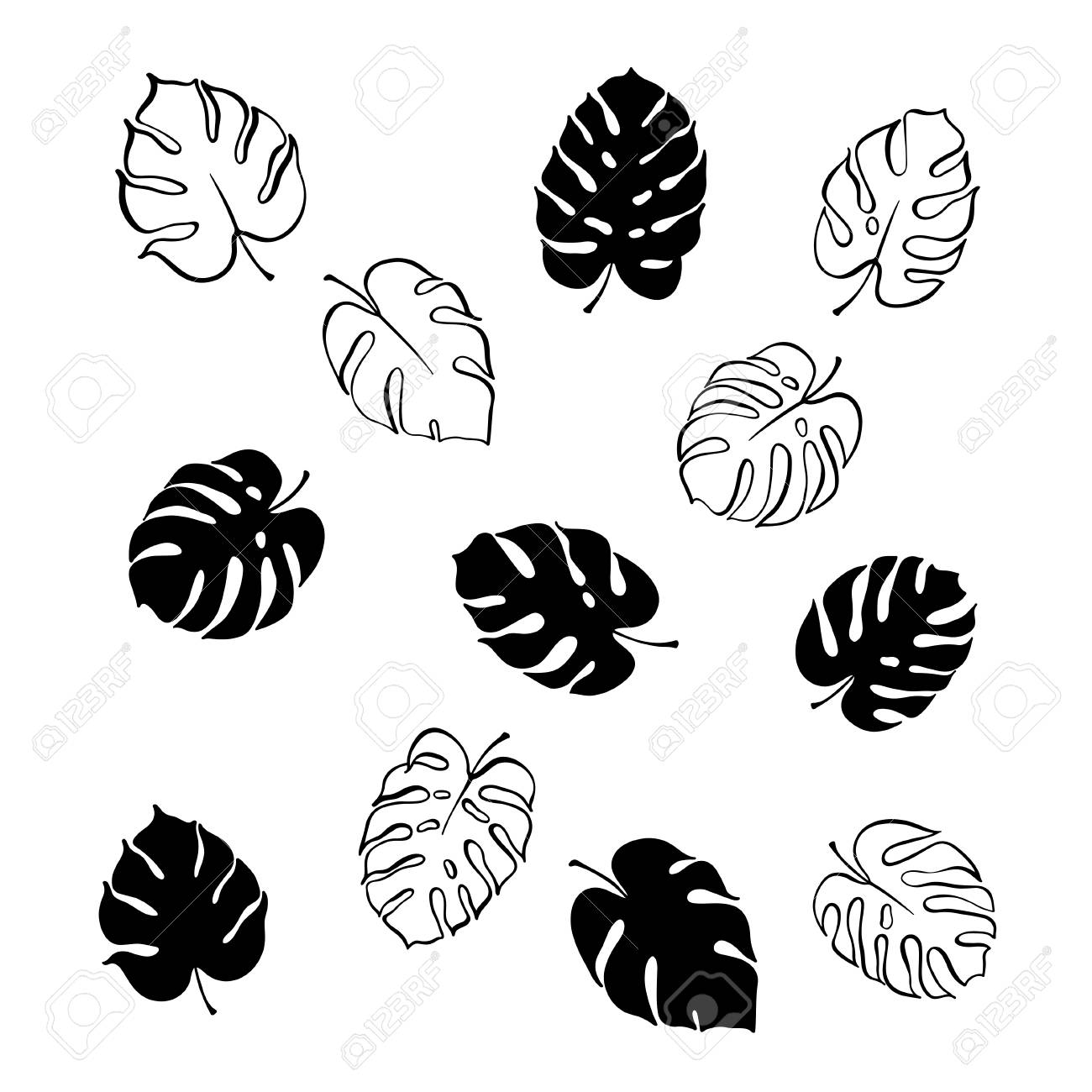 Vector Botanical Illustration Of Monstera Leaf Isolated Outline Royalty Free Cliparts Vectors And Stock Illustration Image 101686781 I painted the leaves on paper and draw the ink leaf branch outline separately. vector botanical illustration of monstera leaf isolated outline