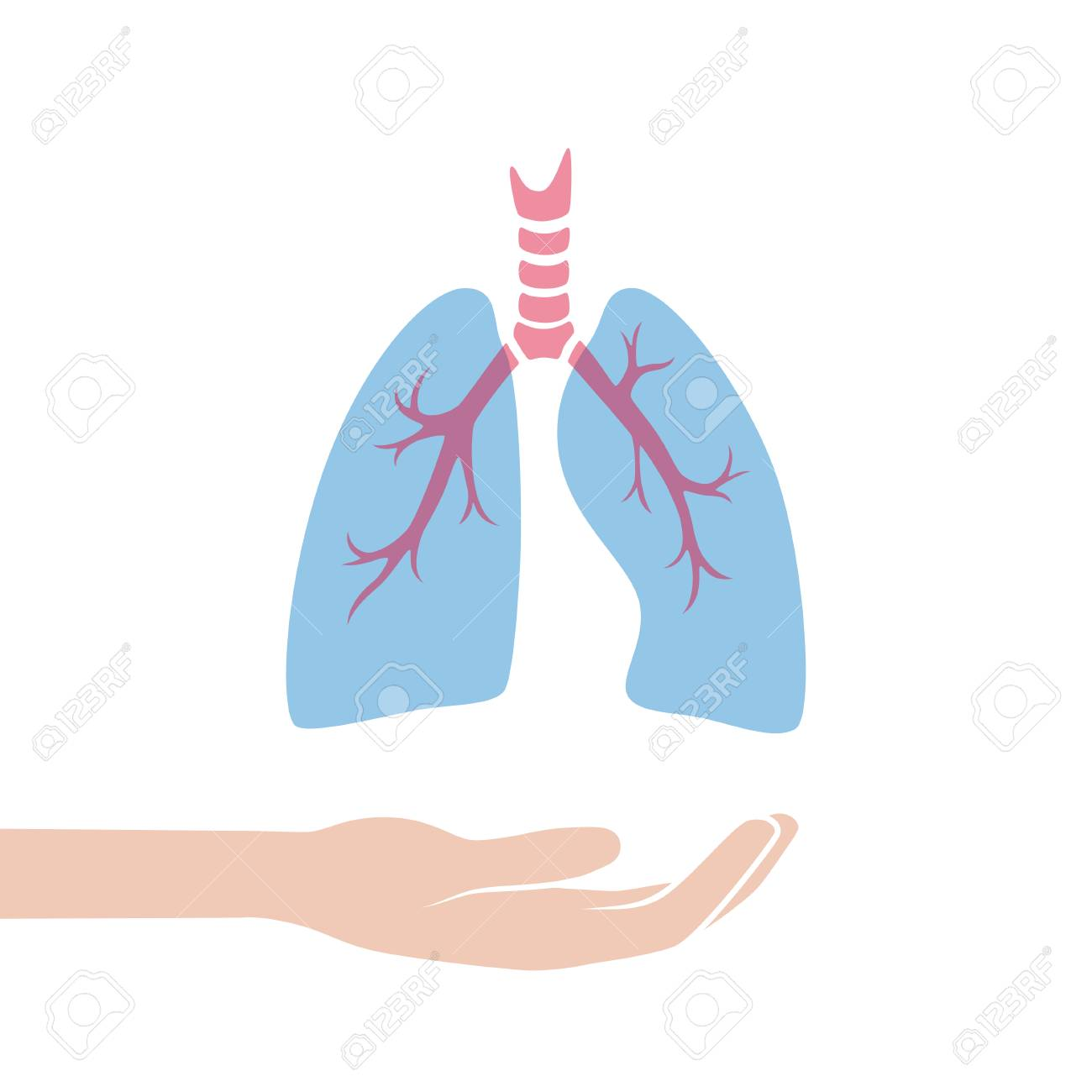 Vector Isolated Illustration Of Lung Anatomyman Ocular System