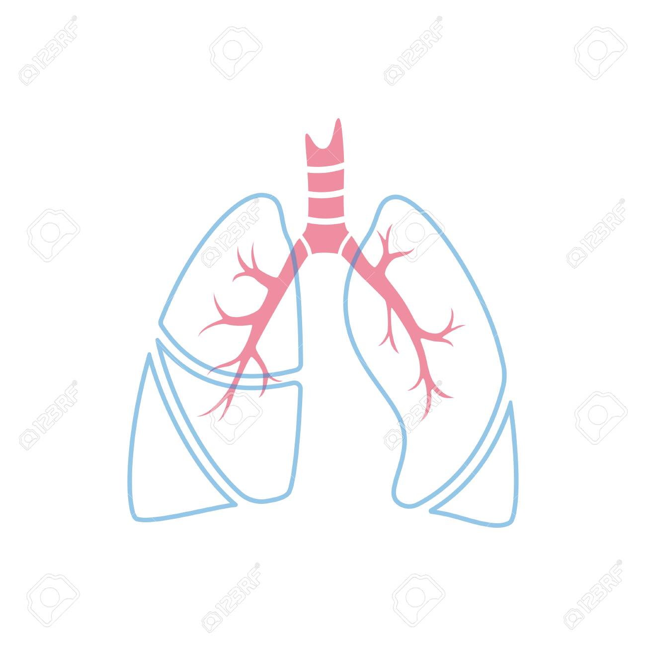 Vector Isolated Illustration Of Lung Anatomy Human Respiratory