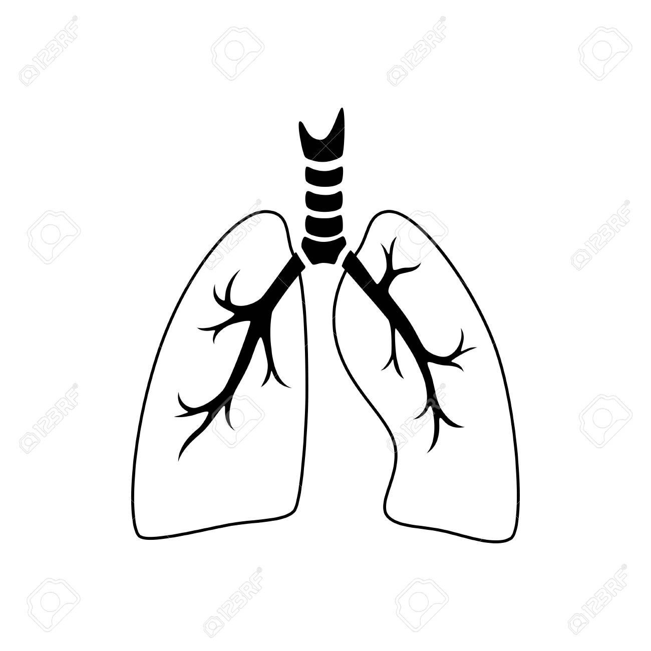 Vector Isolated Illustration Of Lung Anatomyman Ocular System