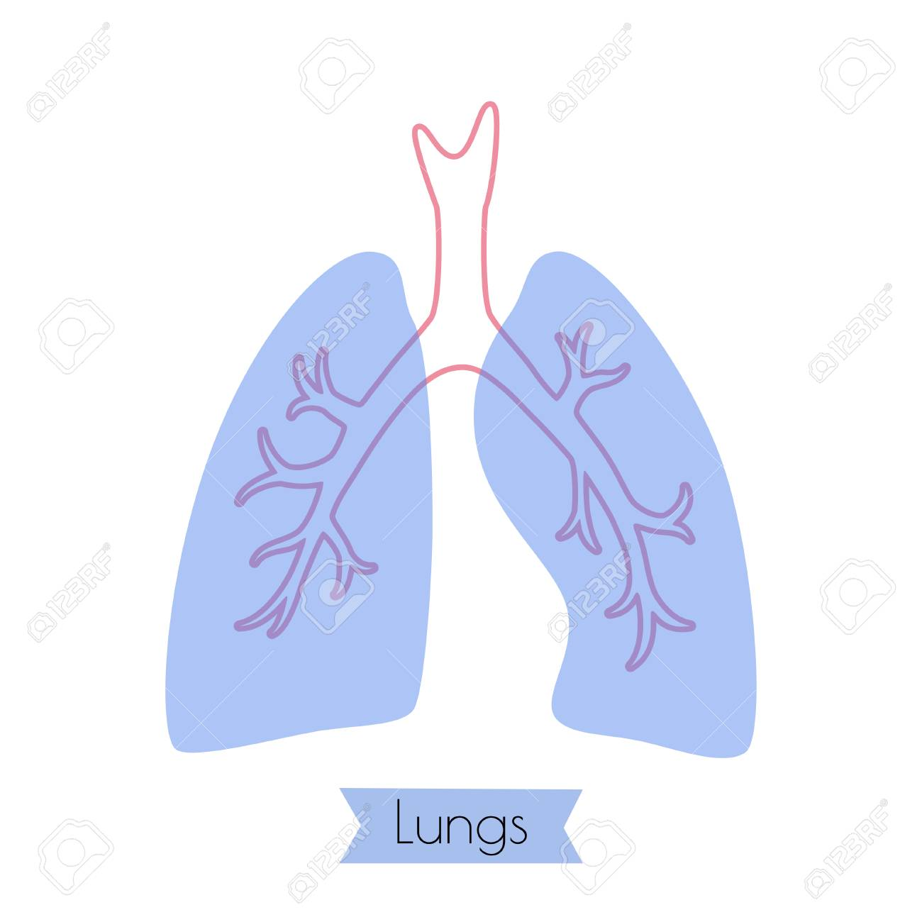 Vector Isolated Illustration Of Lung Anatomy Human Circulatory