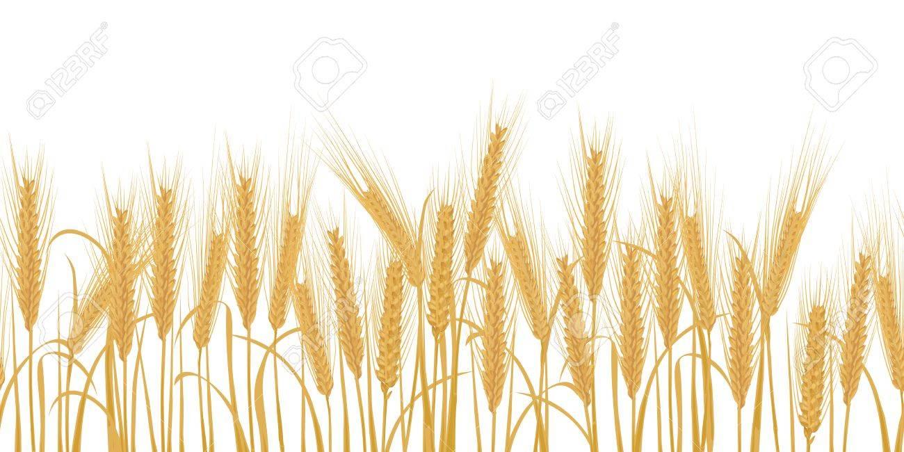 Ears of wheat horizontal border seamless pattern Vector illustration - 53768011