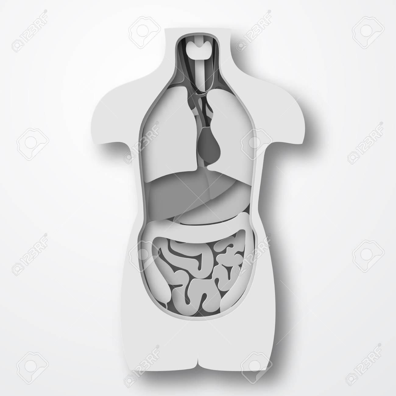 Menschliche Körper Anatomie, Medizinische Organe System Papier ...