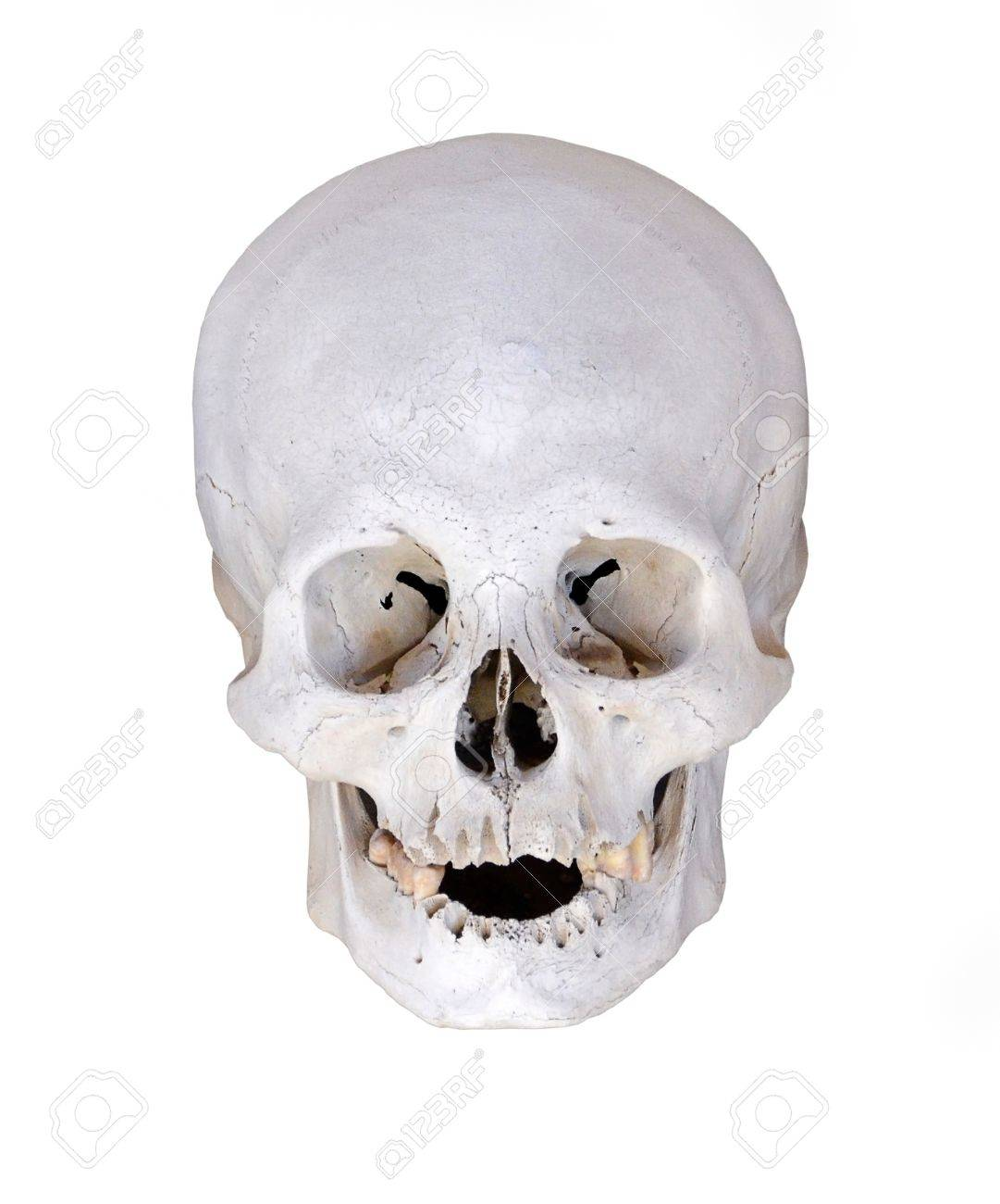 human skull from excavations isolated on white background stock, Skeleton