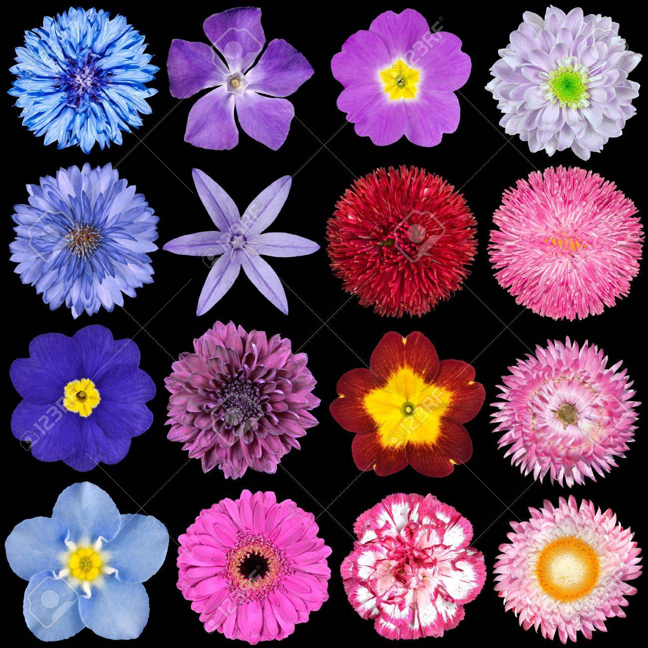Big Selection Of Colorful Flowers Isolated On Black Background ...