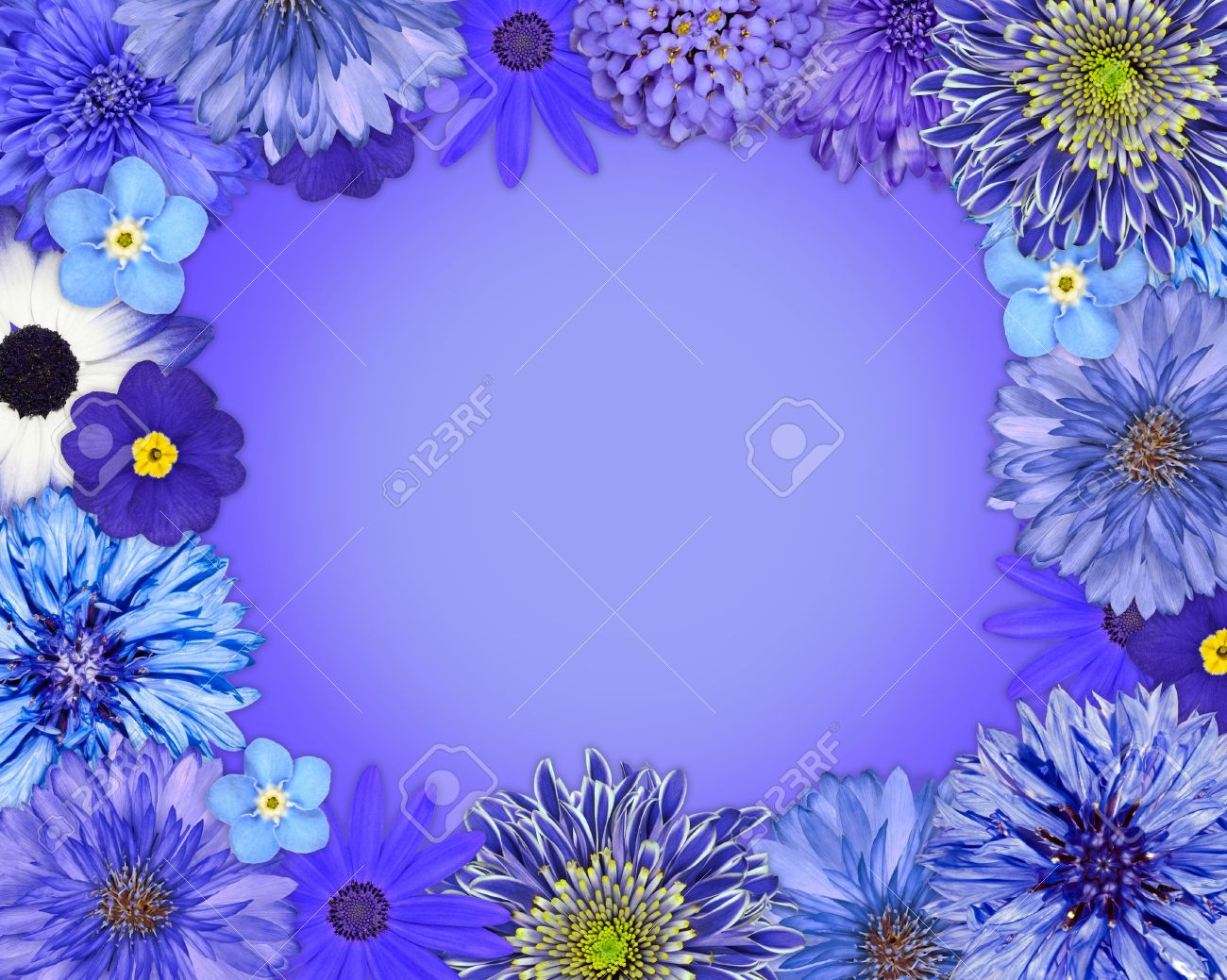 blue background flowers