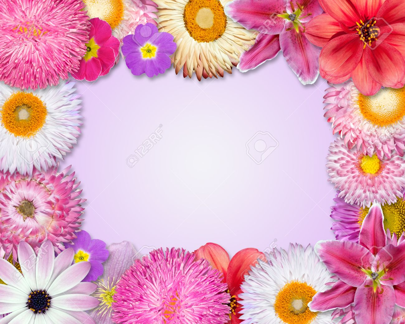 Flower Frame With Pink Purple Red Flowers Isolated On Pink Stock