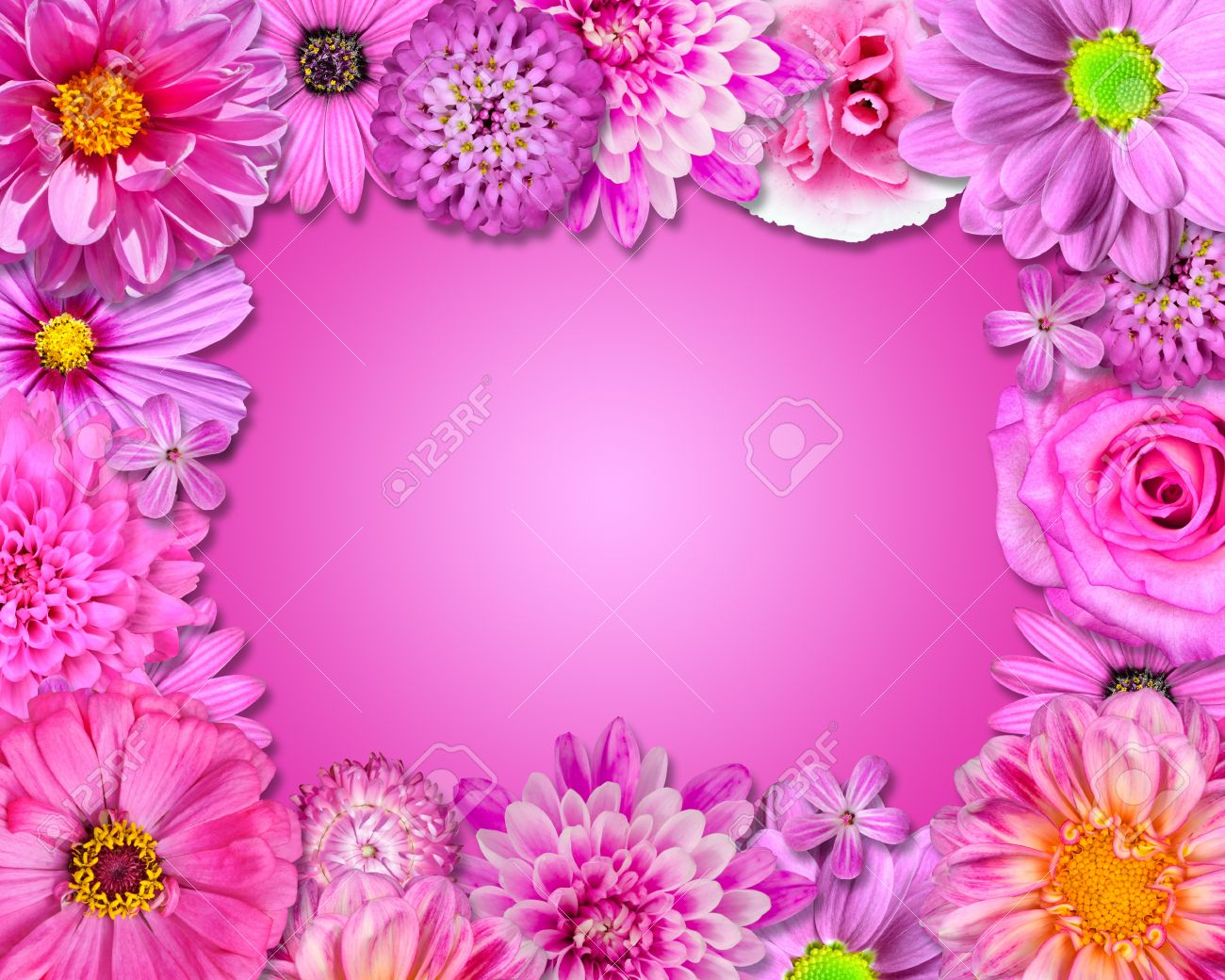 Flower Frame With Pink Purple Flowers Isolated On Pink Background
