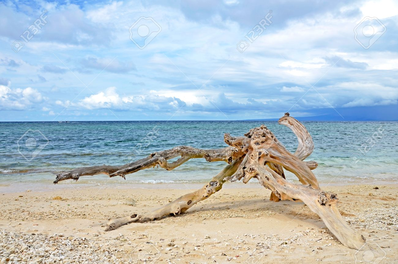 Washed Out Driftwood On Sandy Beach With Ocean And Cloudy Sky Stock Photo Picture And Royalty Free Image Image 19503206