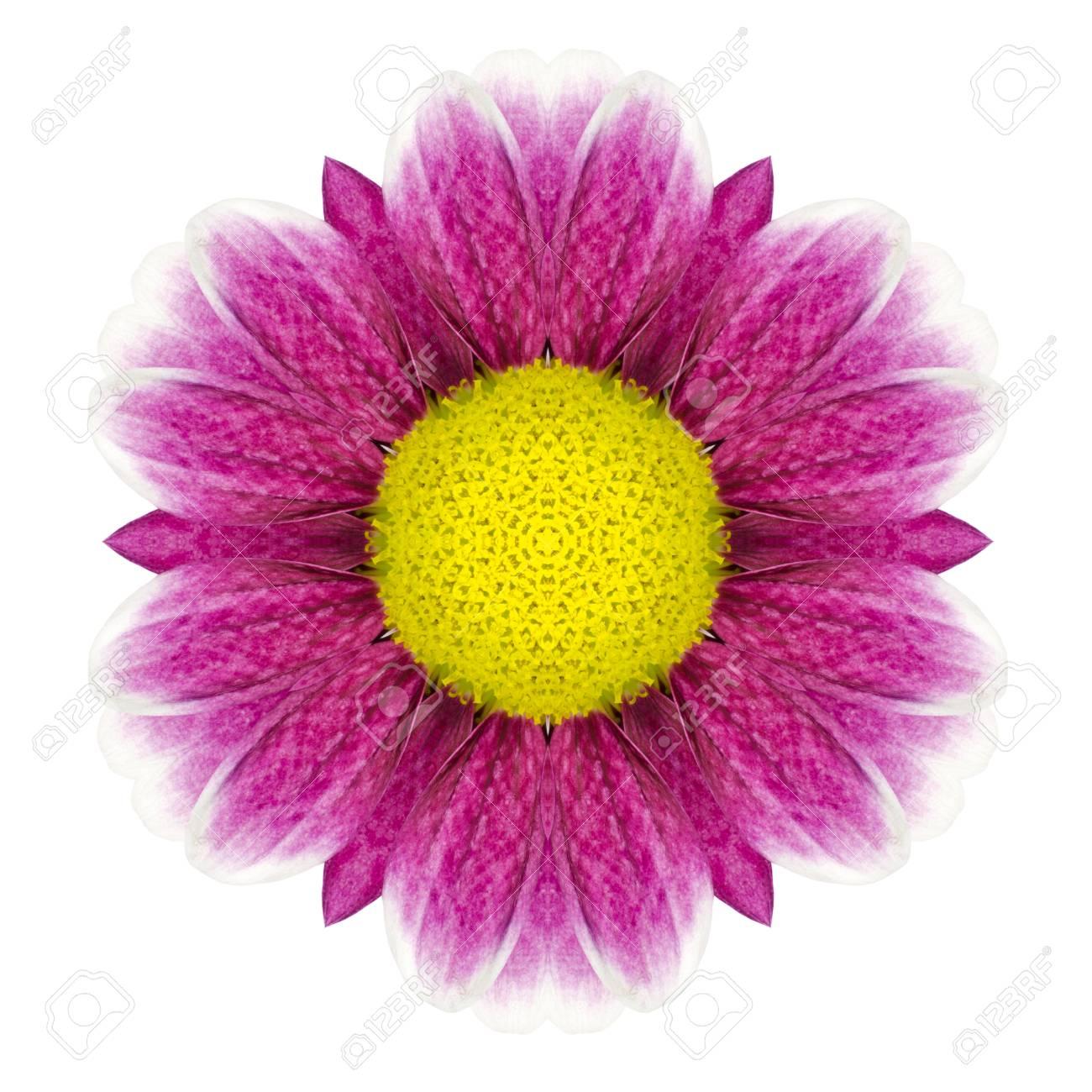 Purple Kaleidoscopic Daisy Flower Mandala With Yellow Center Stock