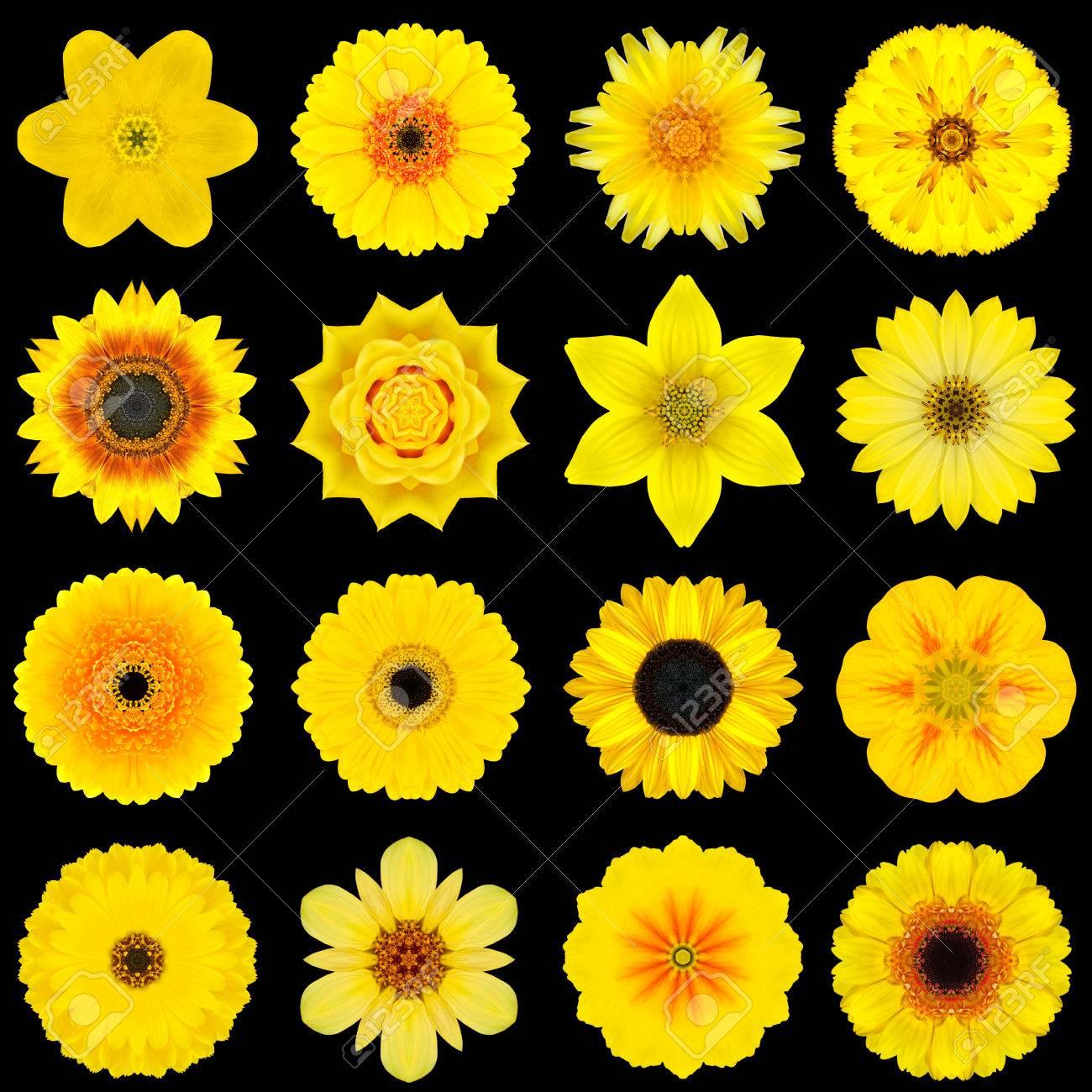 Big Collection Of Various Yellow Flowers Kaleidoscopic Mandala