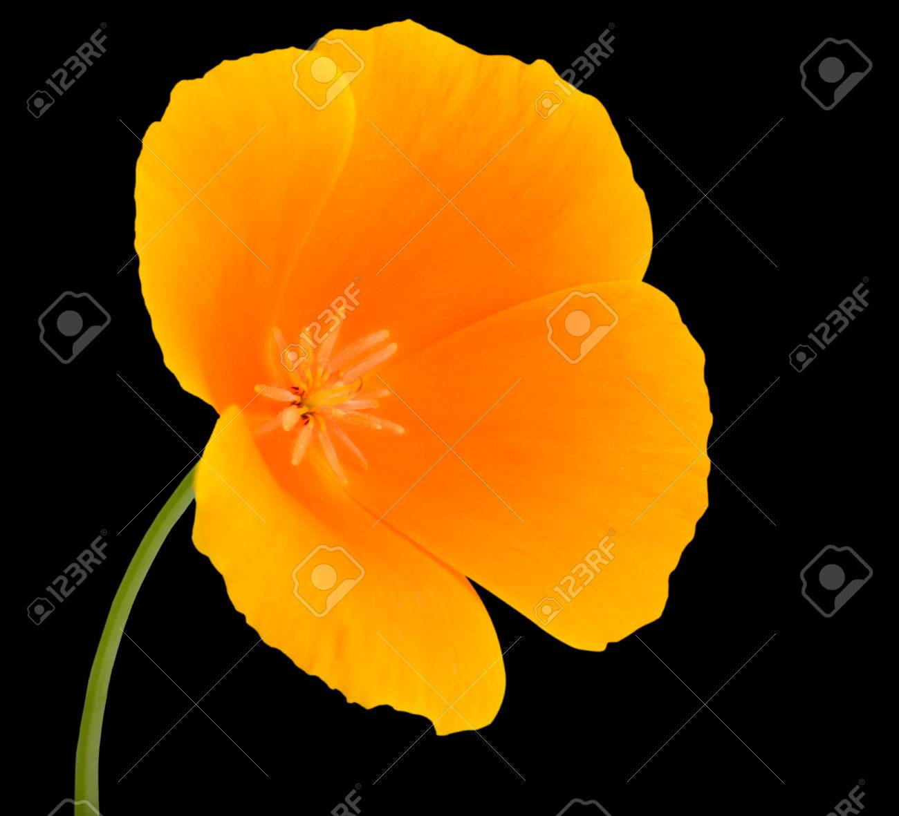 Yellow Wildflower Flower With Orange Center On Green Stick Isolated