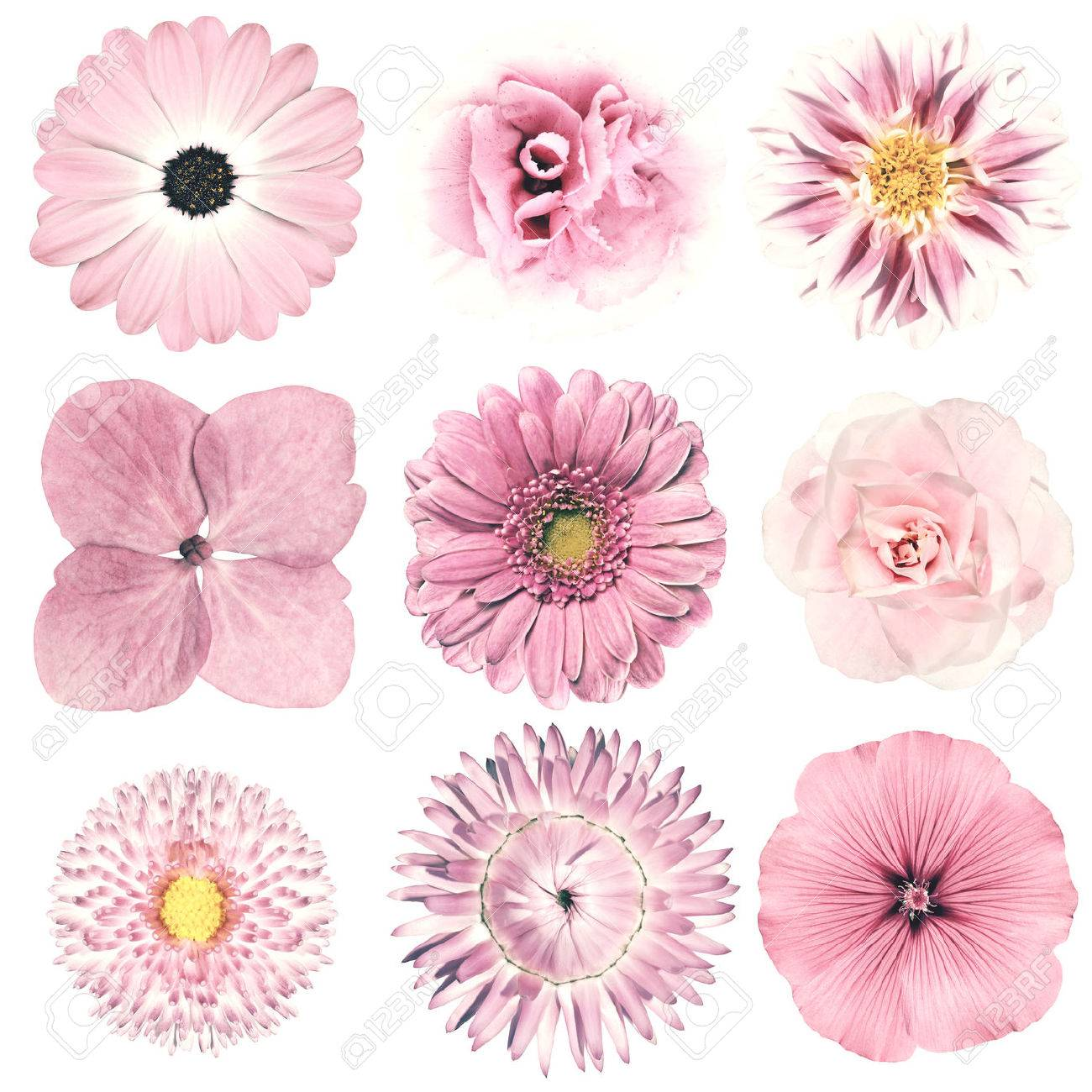 Selection Of Various Flowers In Pink Vintage Retro Style Isolated