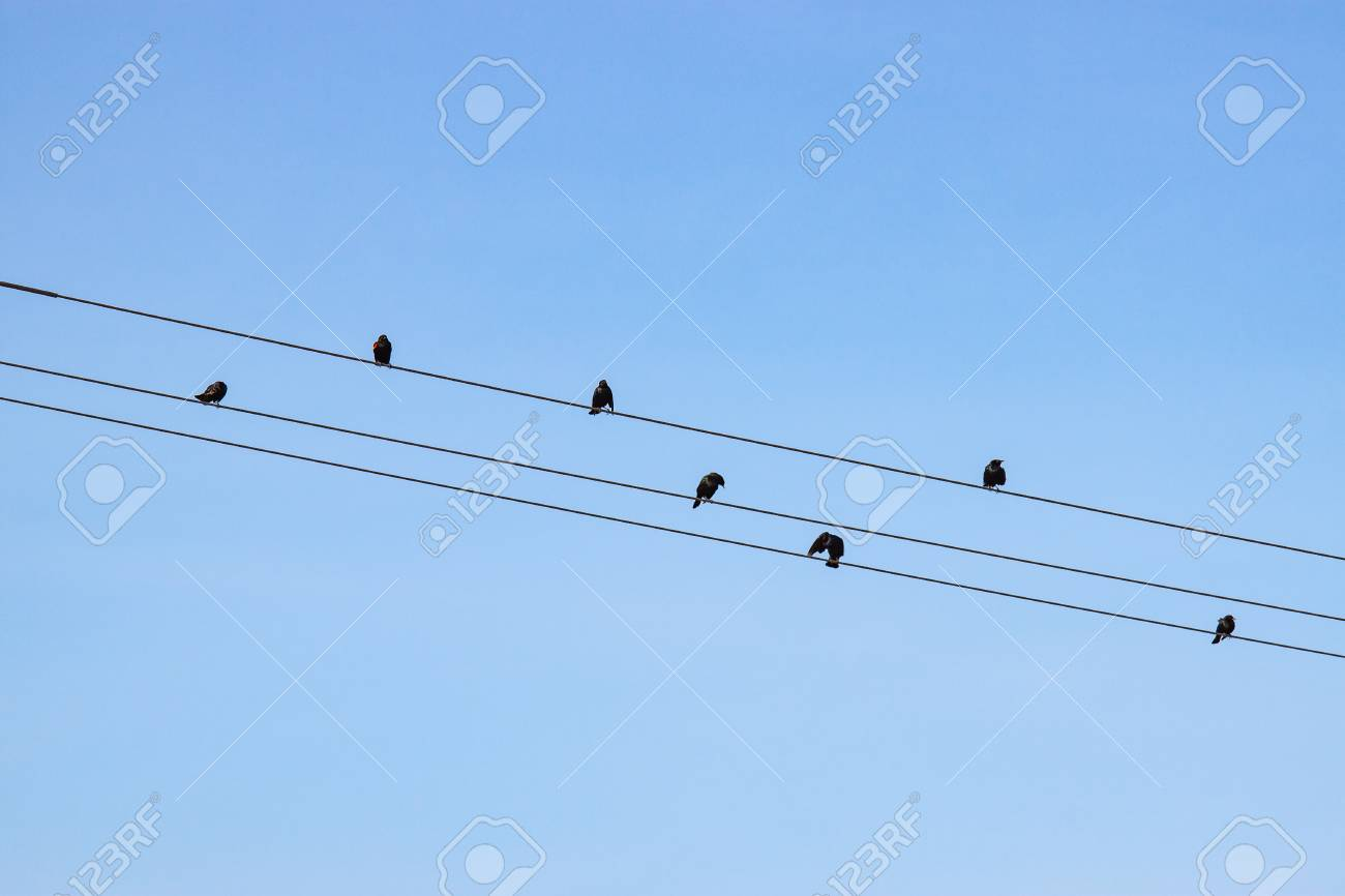 Numerous Small Birds On Telephone Wires Silhouetted Against A ...