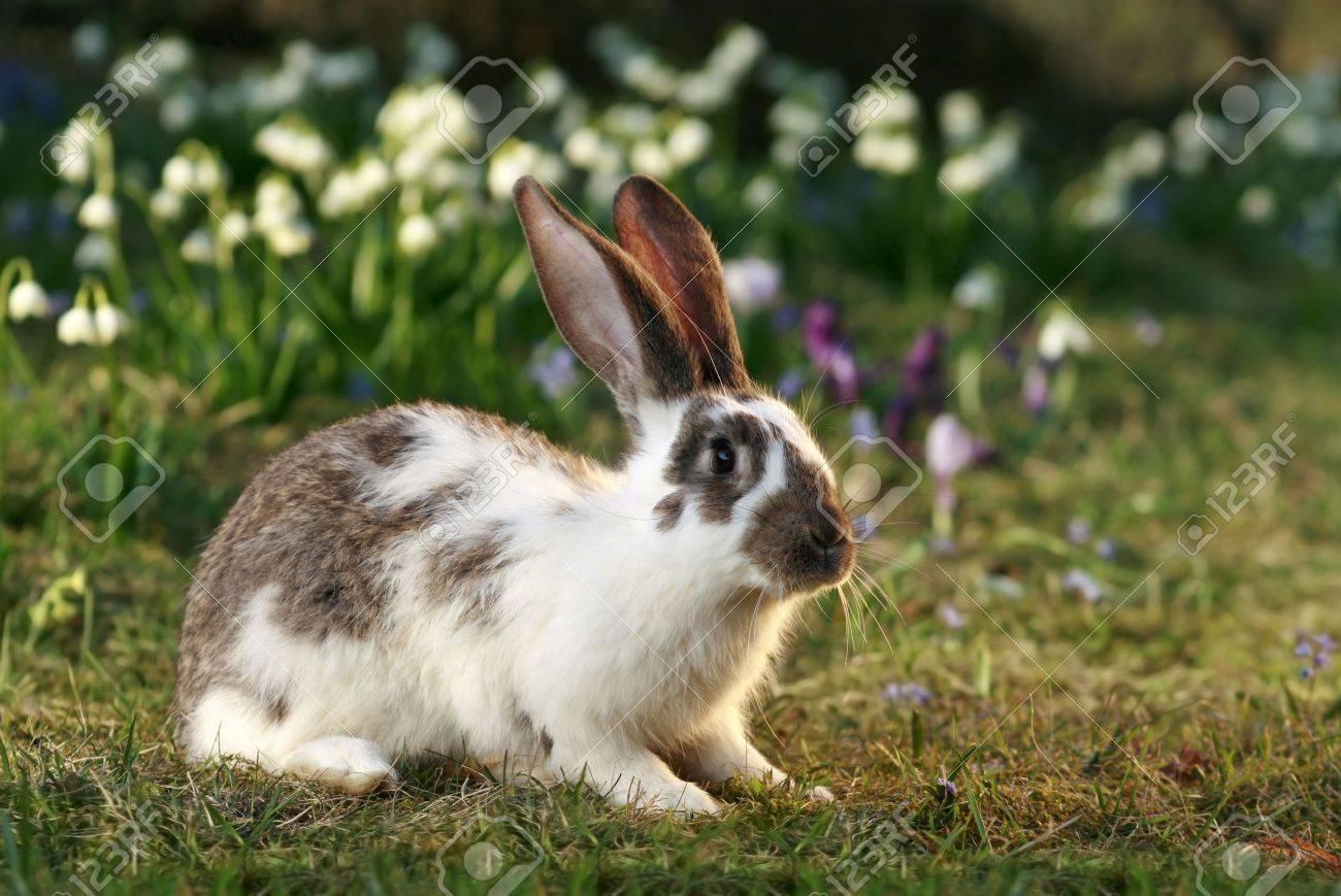 vigilant rabbit on meadow bunny u0027s free early spring stock photo