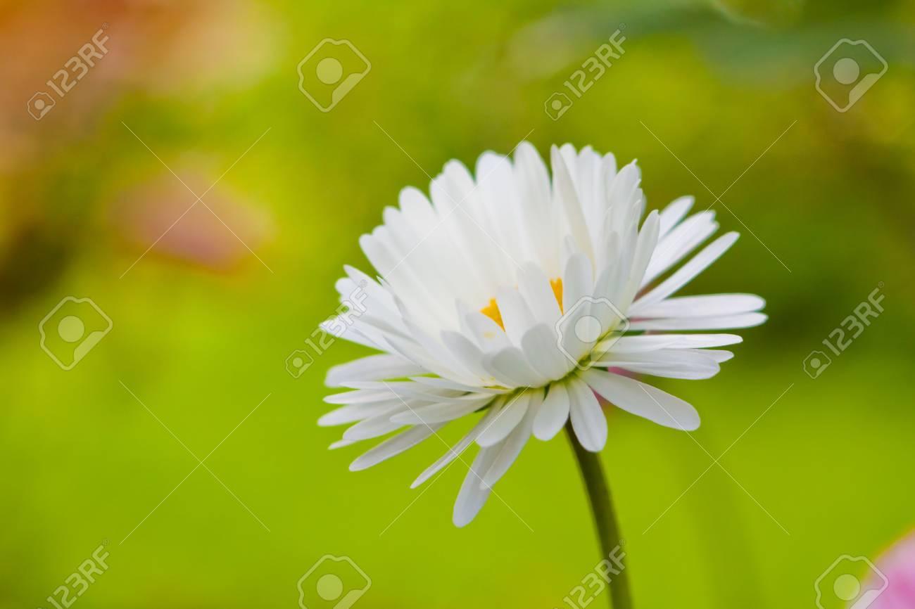 Chamomile close-up macro on nature background Stock Photo - 6273056