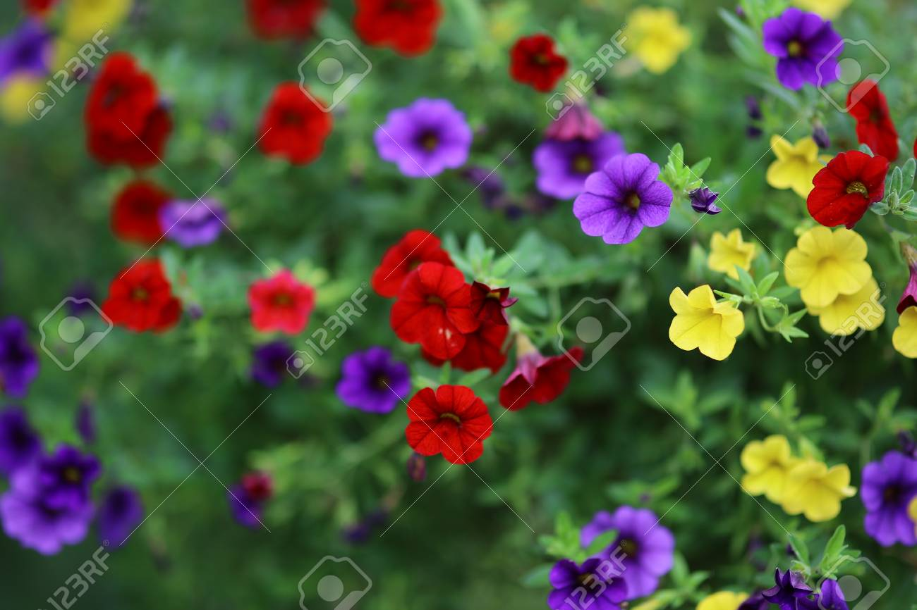 Flowers with shallow Depth Of Field in summer - 86806508