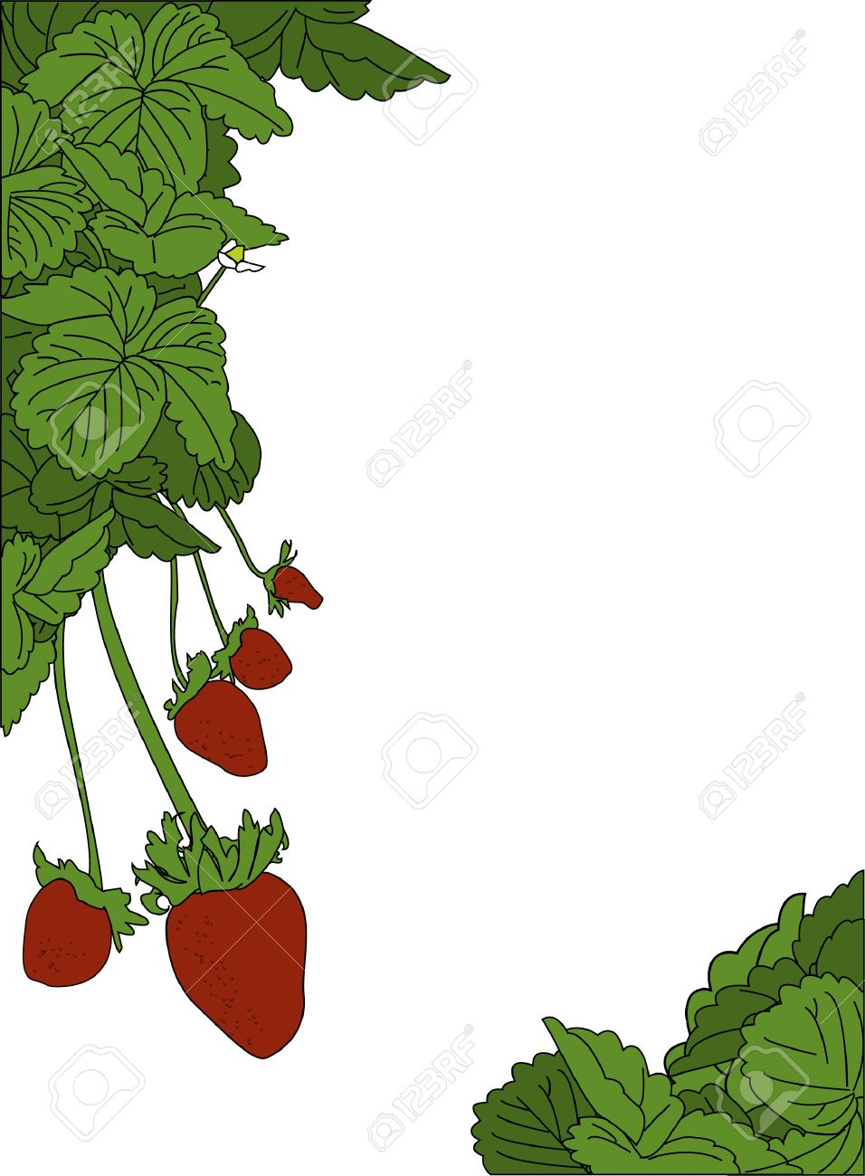 a strawberry plant page border design royalty free cliparts