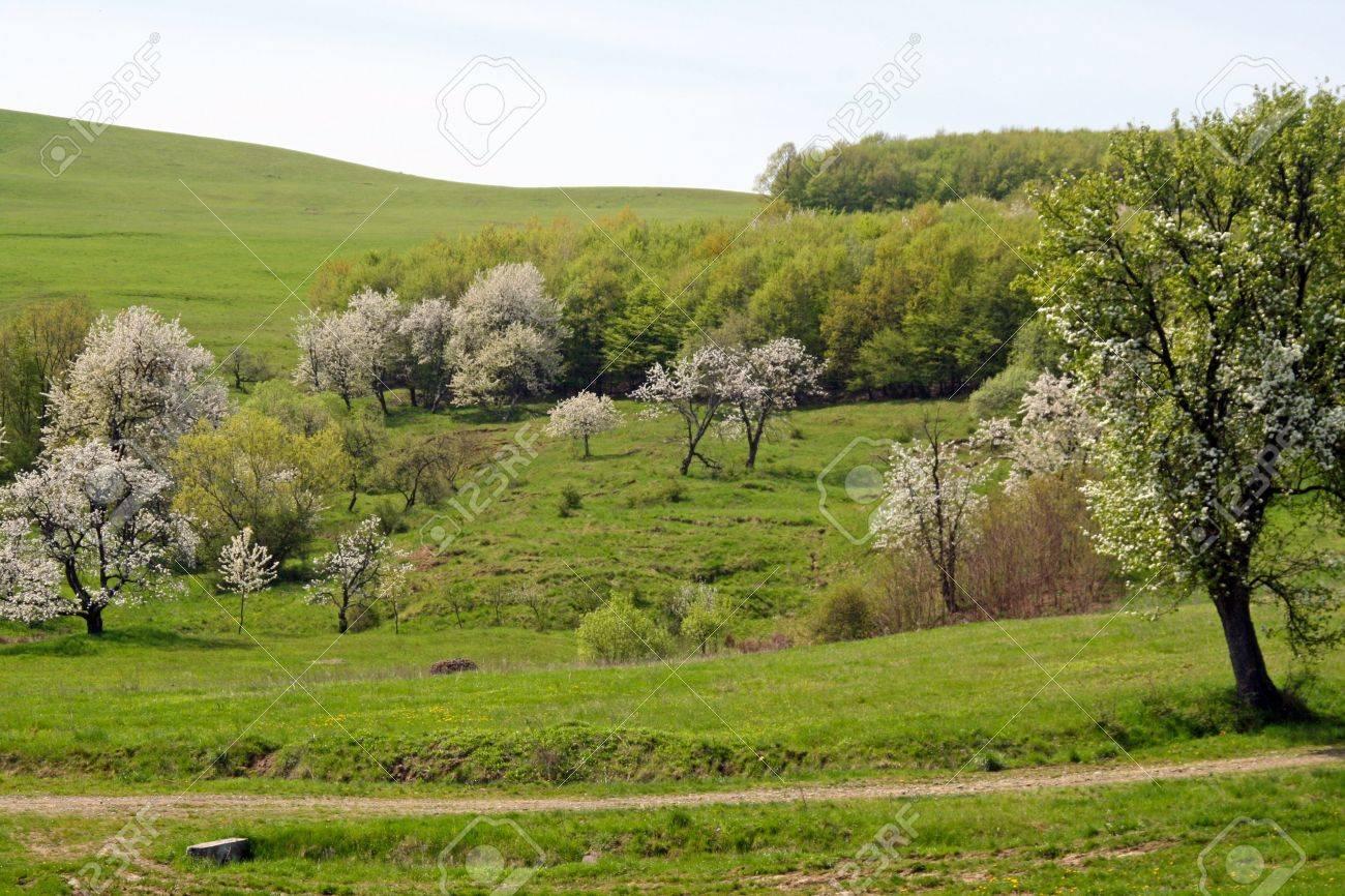 トランシルバニア アルプス山脈の開花の木 の写真素材・画像素材 Image ...