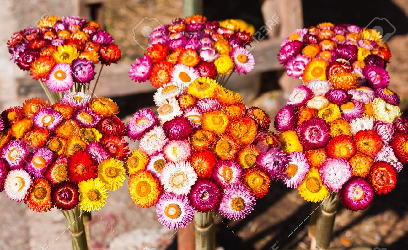 Bouquet Of Dry Straw Flower Or Everlasting (Helichrysum Bracteatum ...