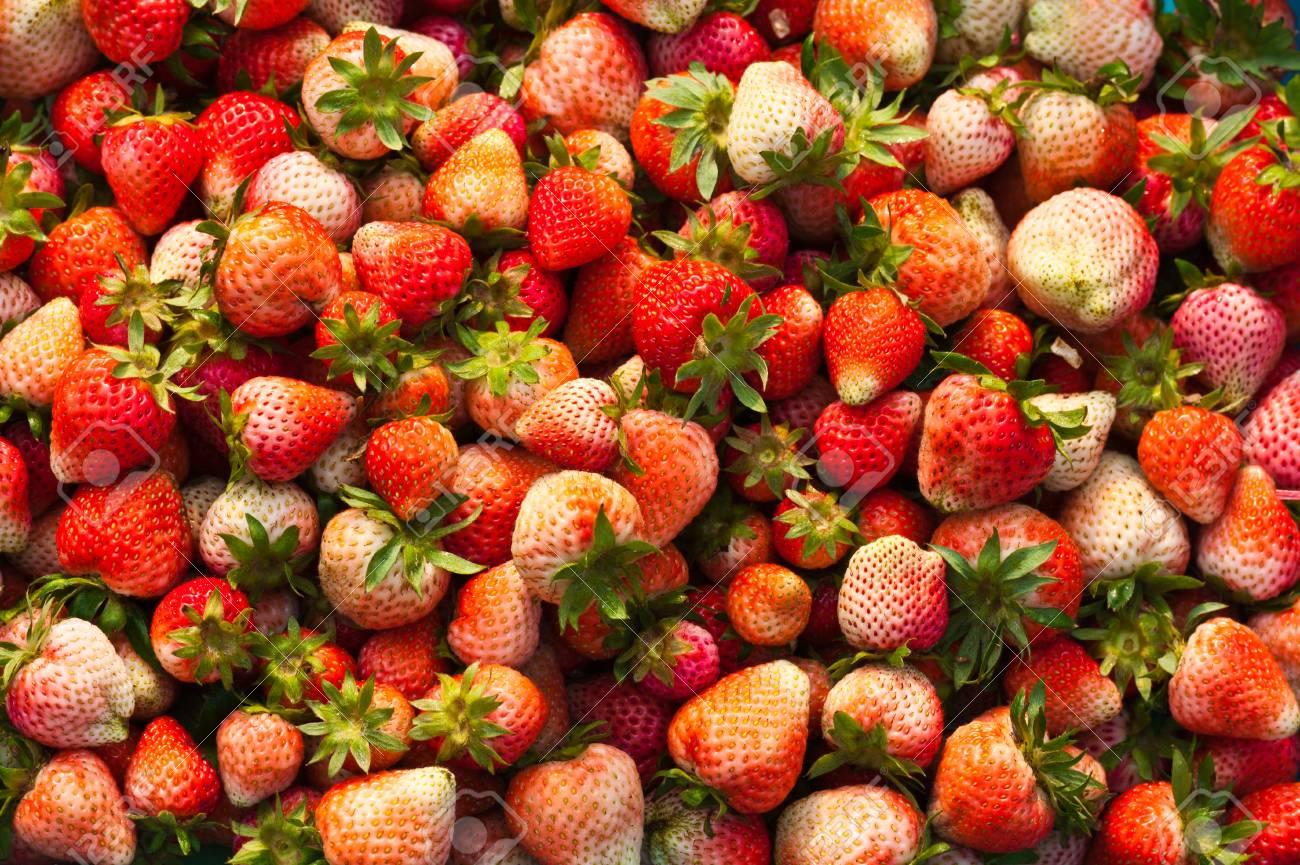 Fresh strawberries Stock Photo - 12605755