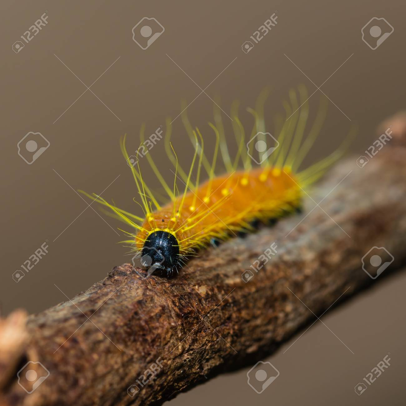 Caterpillar Stock Photo - 15791253