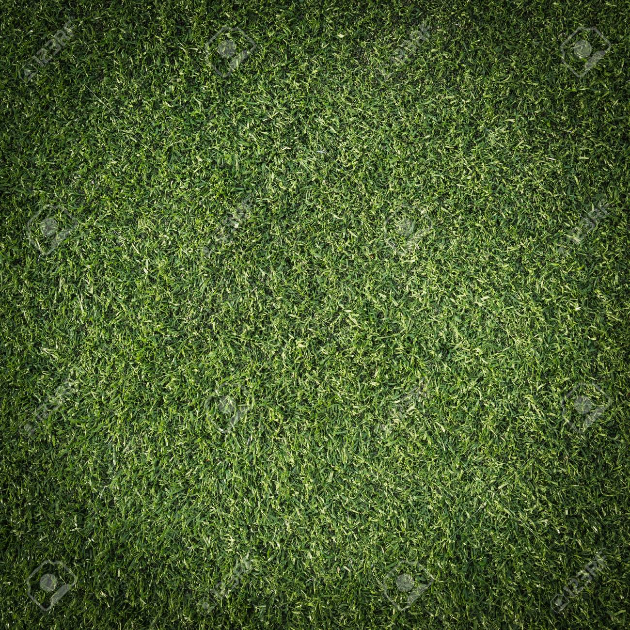 Green grass surface Stock Photo - 15829005