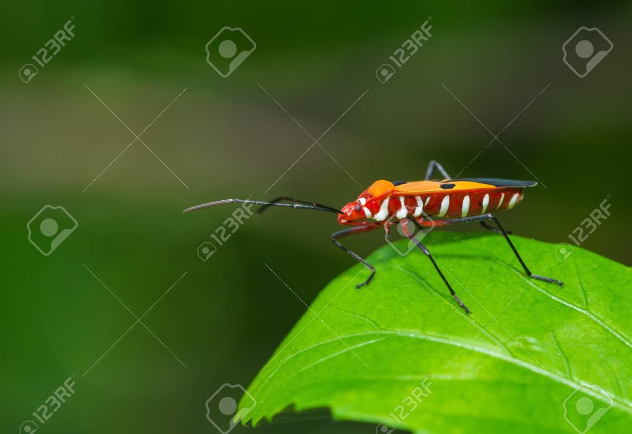 stink bug resting on a leaf Stock Photo - 17947164