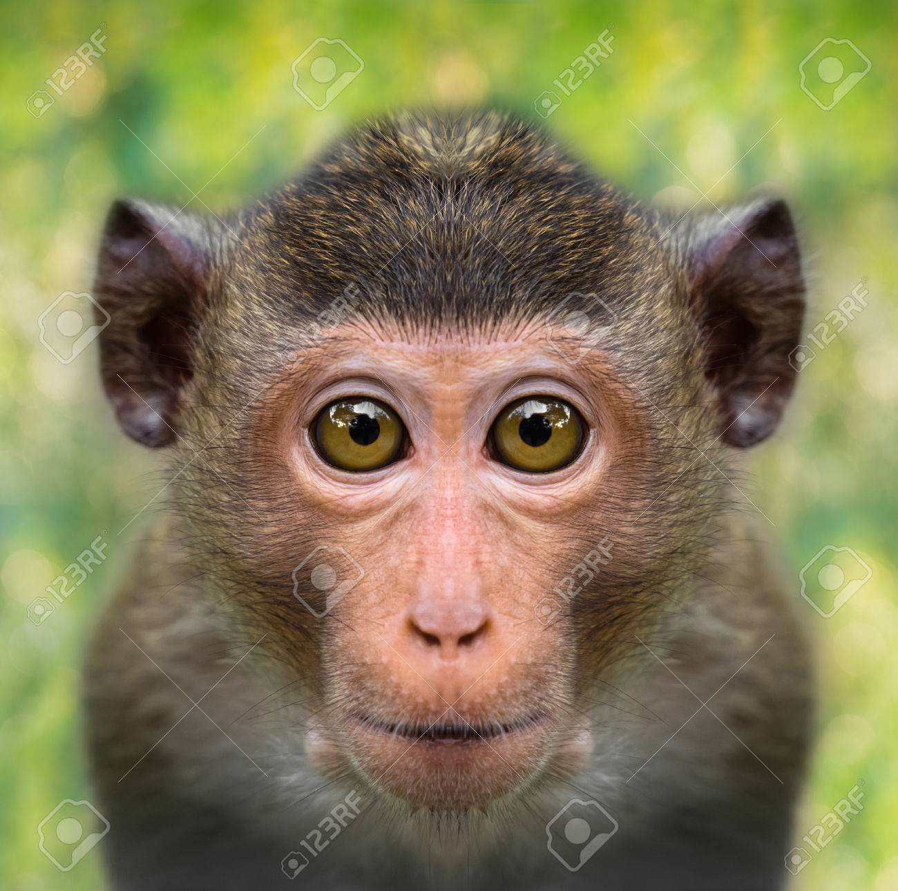 funny monkey face close up with big eyes stock photo picture and