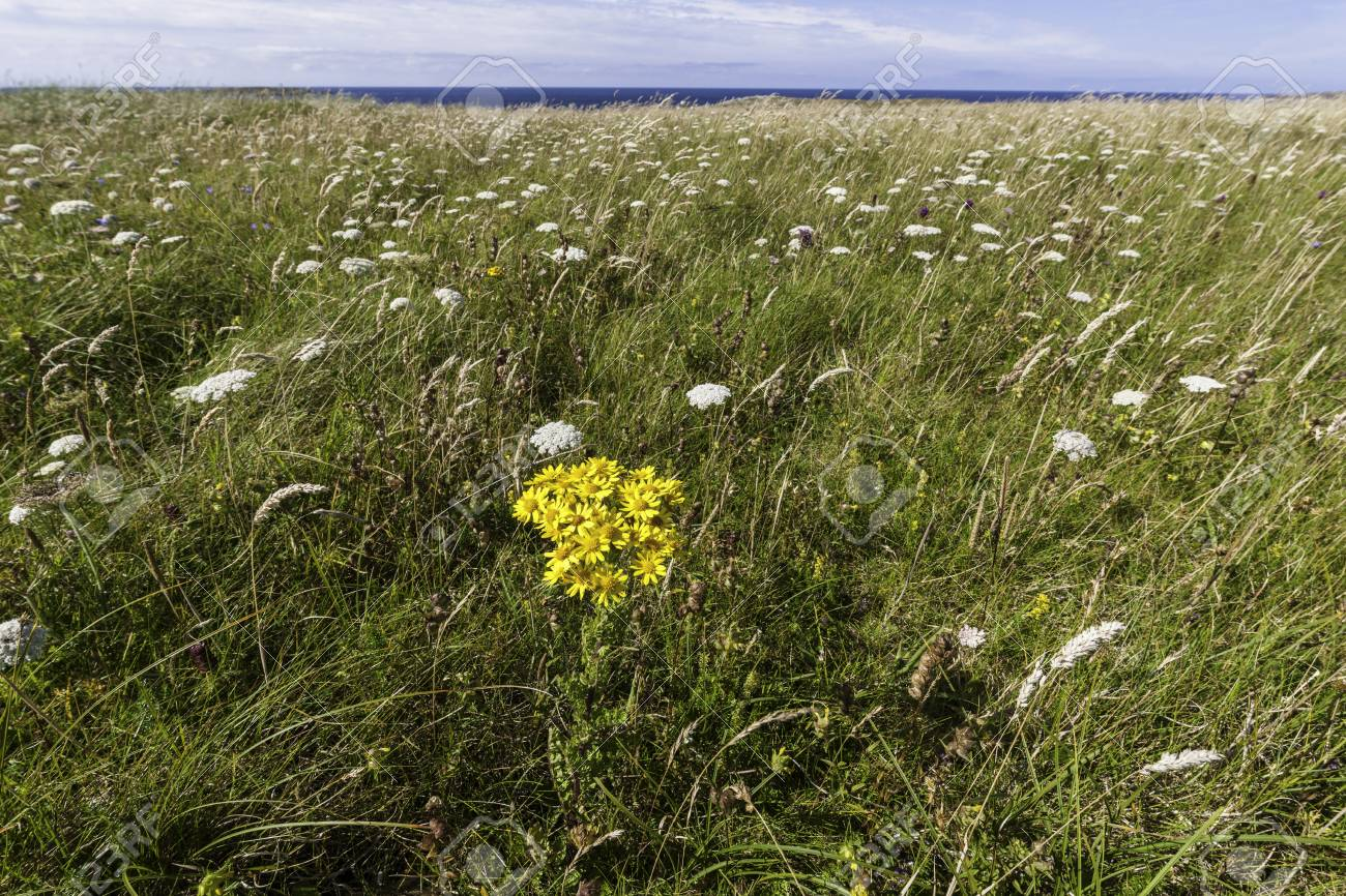 Wild Summer Flowers In County Donegal Ulster Ireland Stock Photo