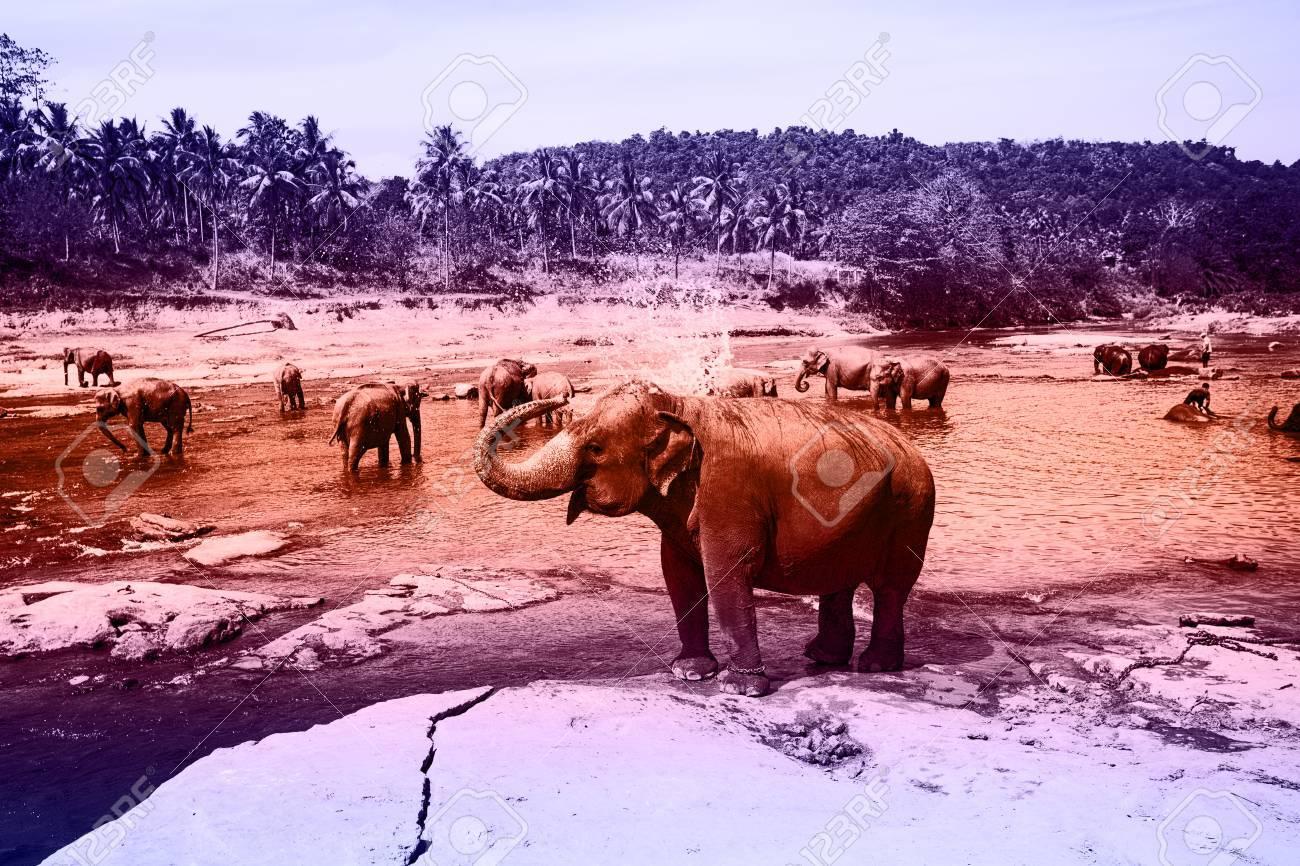 Elephants  Film Noir style Image  BW Art processing  Image contains