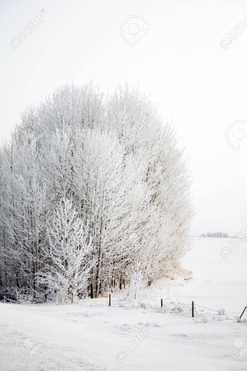Frost covered trees in a snow covered field. Stock Photo - 17335105