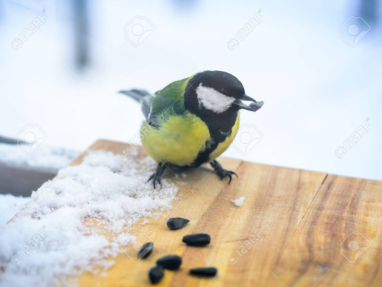 Chickadee eats sunflower seeds in the feeder in cold winter - 68708227