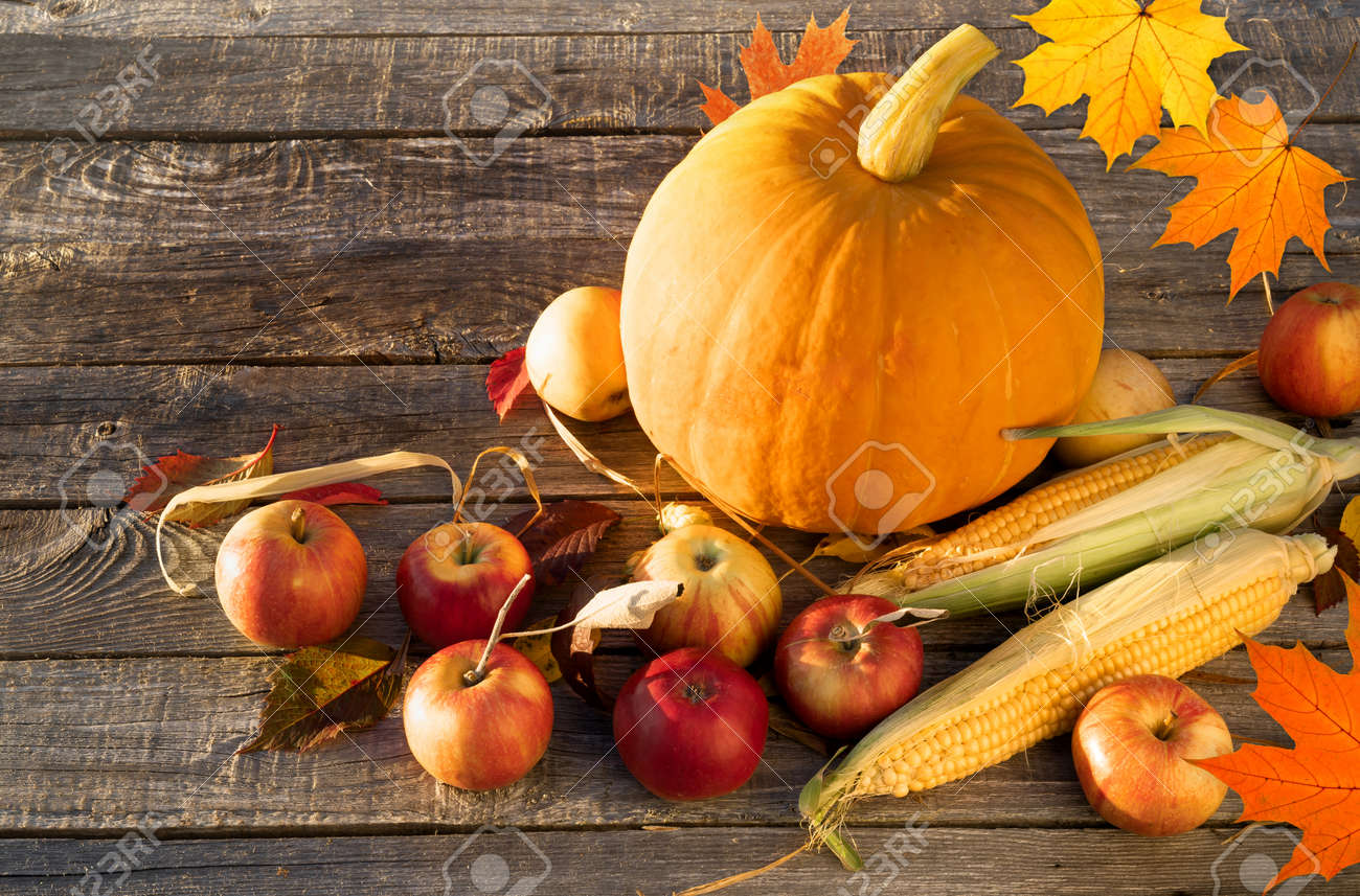 Autumn composition with autumn pumpkin apples corn on the wooden table - 155296602