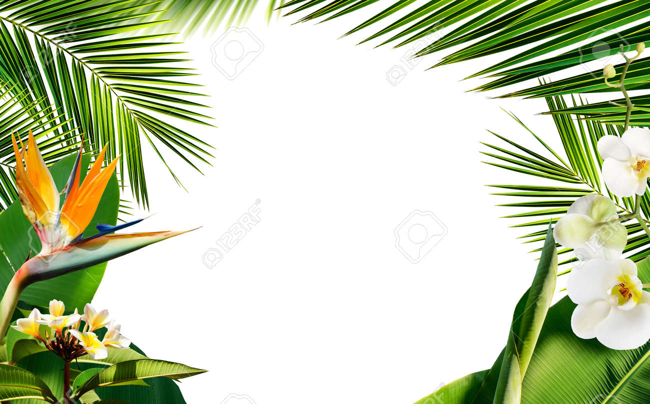 Summer frame with fresh tropical palm leaves plants and flowers isolated on white - 169711151