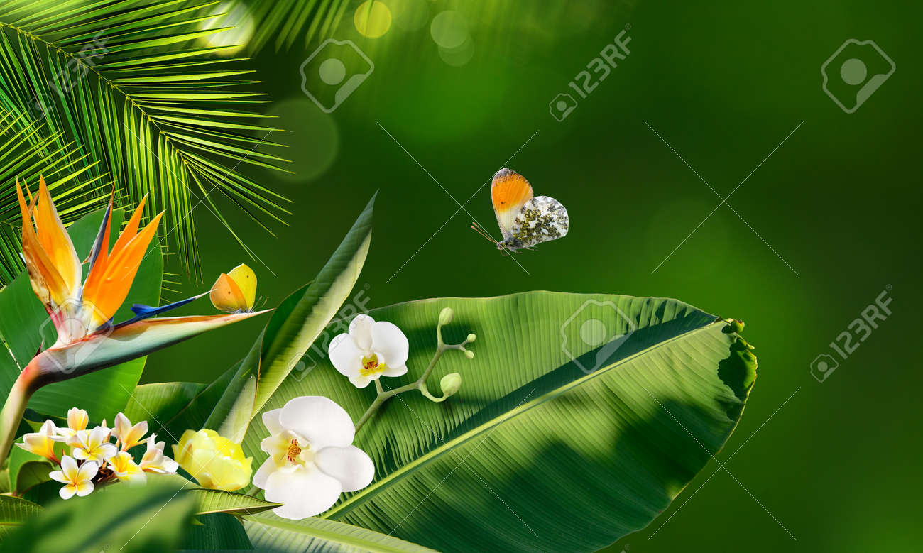 Butterflies flying around tropical flowers and plants on a blurry background - 169711172