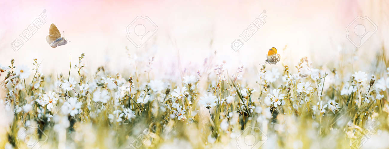 Wild soft flowers in the meadow and flying butterflies - 170081781