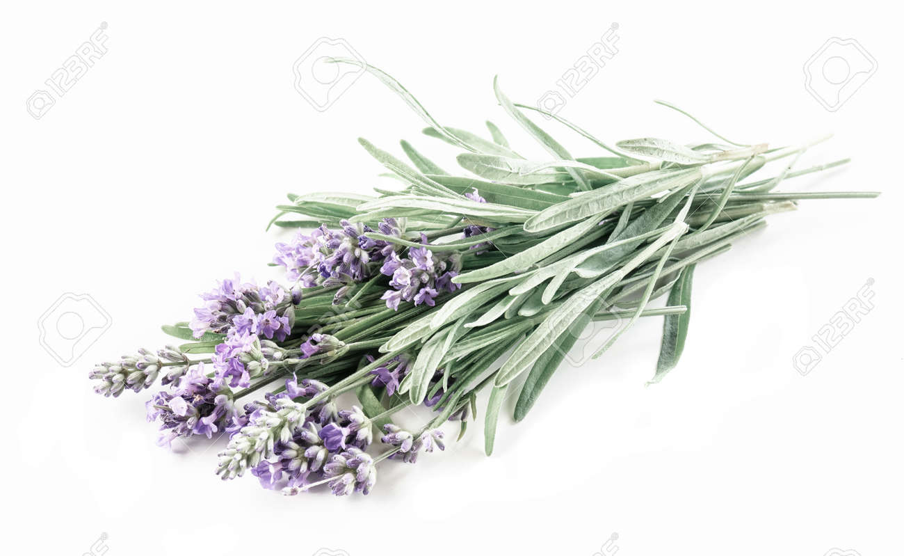 Lavender bunch isolated on a white background - 170528047