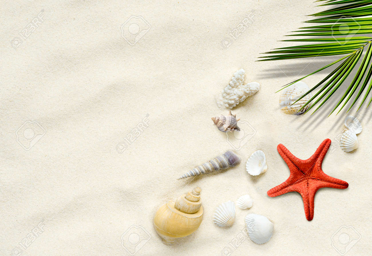 Srarfish, seashells on the sand with palm leaf. Travel vacation summer background - 171678987