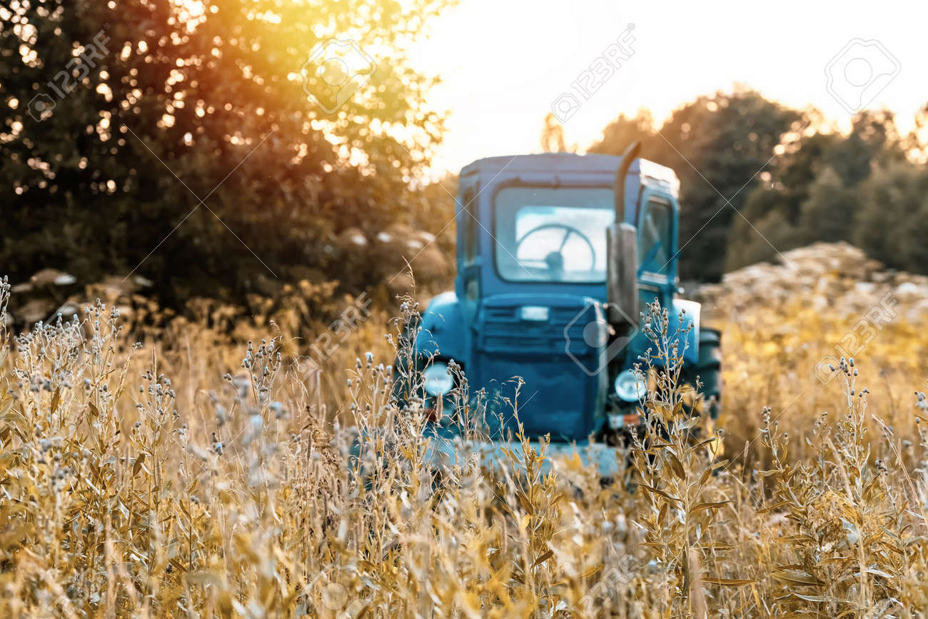 Old blue tractor on the tall dry grass field - 171719107