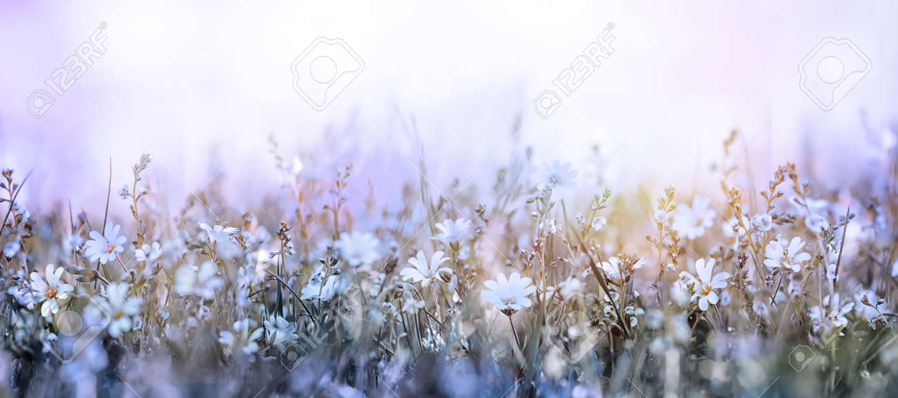 Beautiful morning in the meadow soft flowers background - 173747551