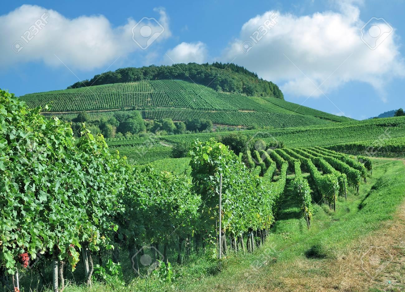 Kaiserstuhl region Landscape Black Germany Wine Vineyard Forest in ZiTOukXwP