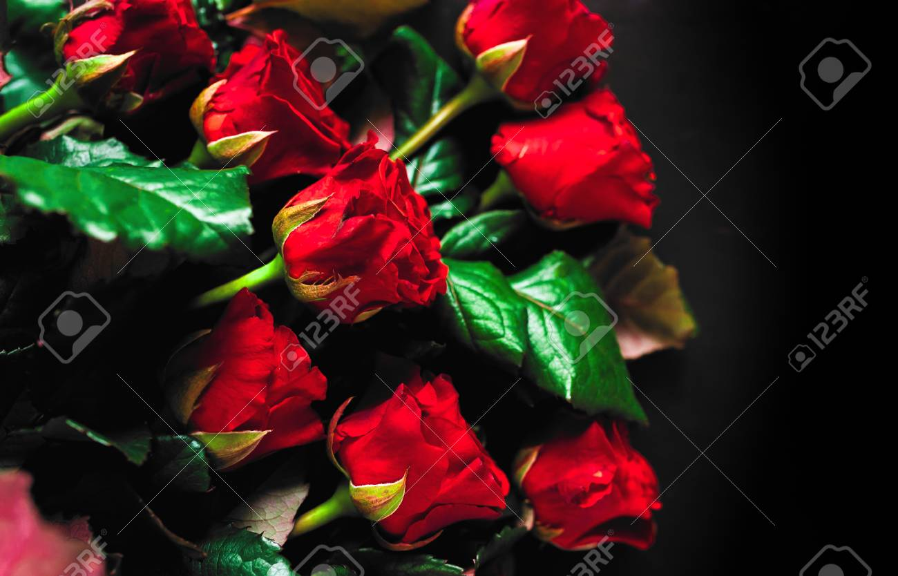 Red Rose Closeup On Black Background Wallpaper Stock Photo Picture And Royalty Free Image Image 97018988