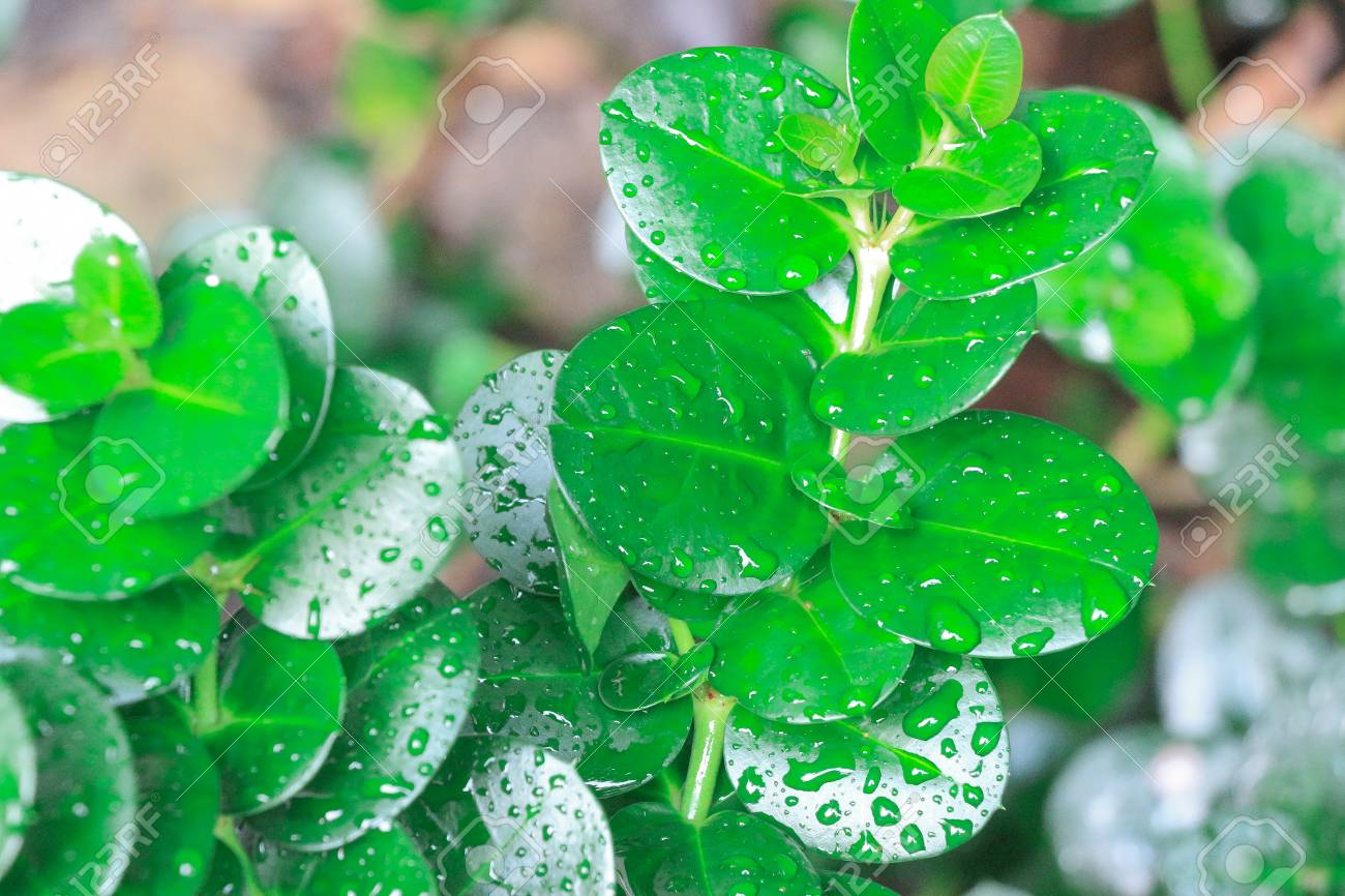 This lush jungle greenery with water droplets is a nice little