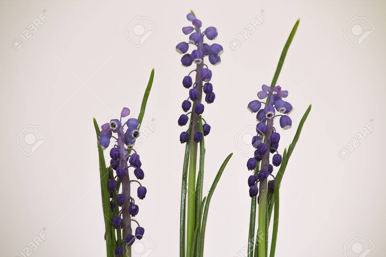 Spring Flowers With White Background And High Quality Flowers