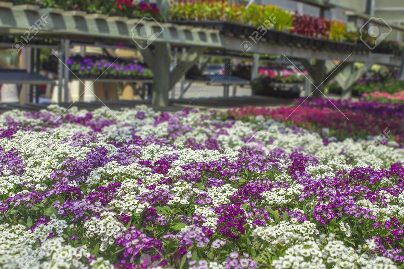 Spring Flowers Organic In Michigan Seasonal Planter Racks In Stock