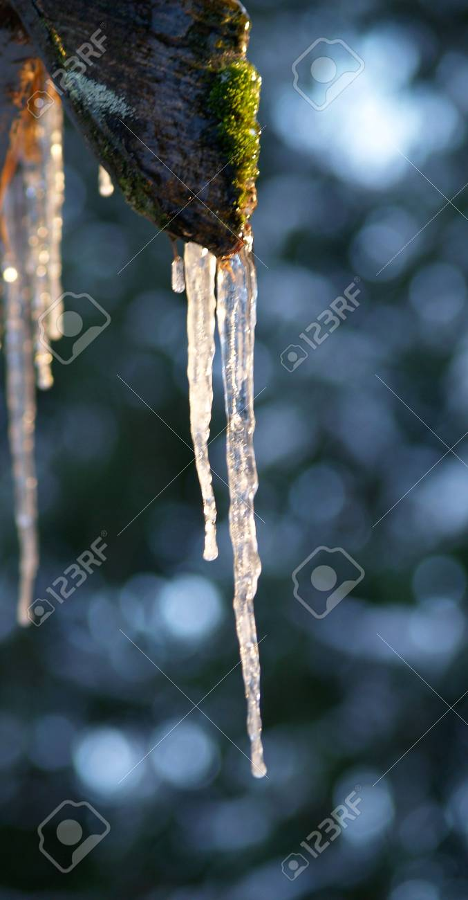 a close-up on icicles Stock Photo - 781956