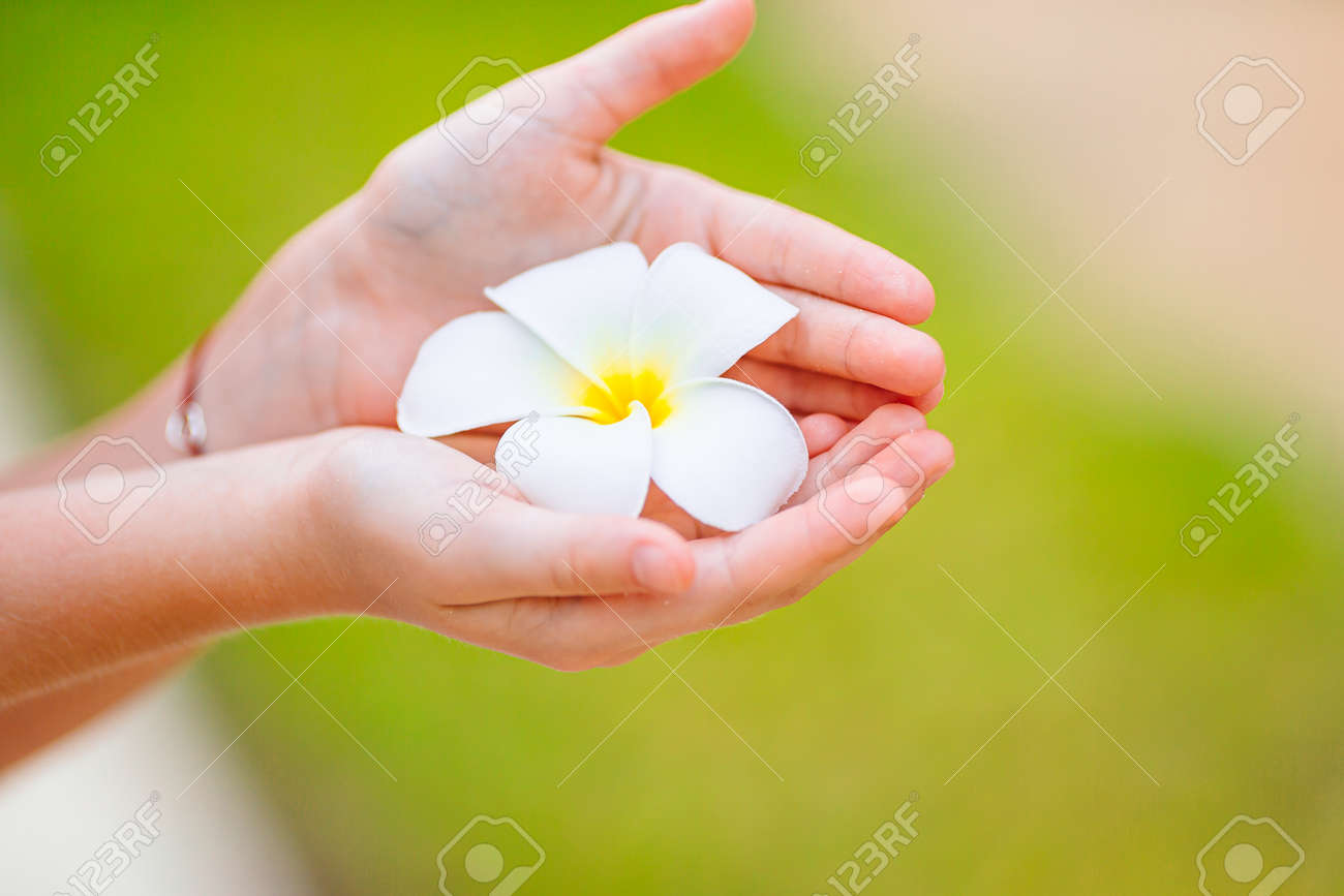 Beautiful frangipani flowers in the hands outdoors - 148832556